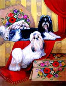 Shih Tzu's To Bless You